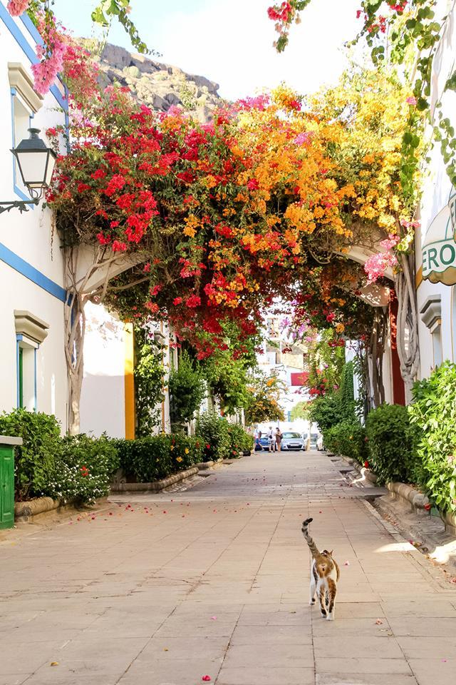 rośliny w miastach