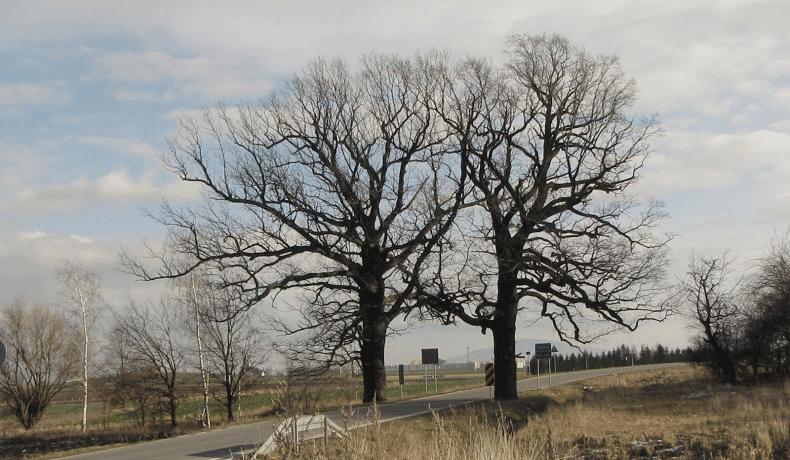 Korzyści jakie dają drzewa środowisku